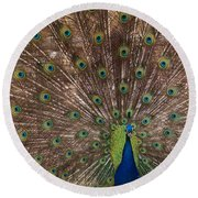Peacock At The Fort Round Beach Towel