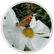 Peacock Butterfly On Cosmos Round Beach Towel