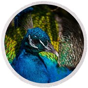 Peacock Closeup Round Beach Towel
