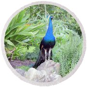 Peacock Landscape Louisiana  Round Beach Towel