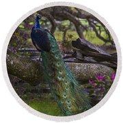 Peacock On The Plantation Round Beach Towel