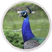 Peacock Portrait #3 Round Beach Towel