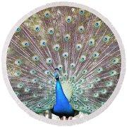 Peacock Show Round Beach Towel