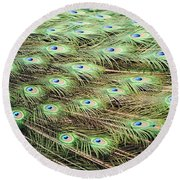 Peacock Tail Feathers  Round Beach Towel