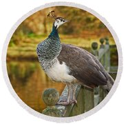 Peahen In Autumn Round Beach Towel