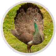 A Peahen's Plumage Round Beach Towel