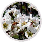 Pear Blossoms And Bee Round Beach Towel