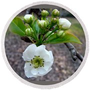 Pear Tree Blossom 3 Round Beach Towel