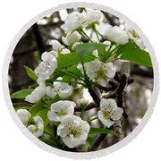 Pear Tree Blossoms 2 Round Beach Towel