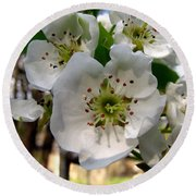 Pear Tree Blossoms 3 Round Beach Towel