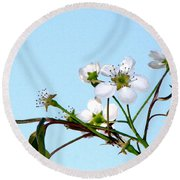 Pear Tree Blossoms 4 Round Beach Towel