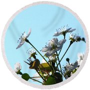 Pear Tree Blossoms 5 Round Beach Towel