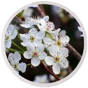 Pear Tree Blossoms II Round Beach Towel