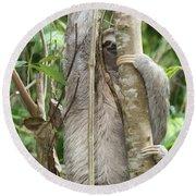 Peek-a-boo Sloth Round Beach Towel