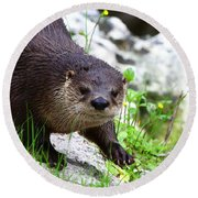 Peering Otter Round Beach Towel