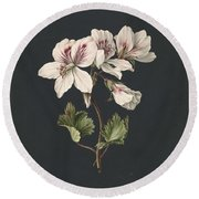 Pelargonium Album Bicolor, M De Gijselaar 1830 Round Beach Towel
