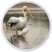 Pelican And Snowy Egret 6459-113017-1cr Round Beach Towel