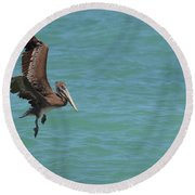 Pelican Contemplating A Water Landing In Aruba Round Beach Towel