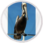 Pelican Dreams Round Beach Towel