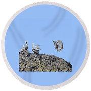 Pelican Landing On A Rock Round Beach Towel