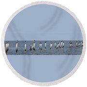 Pelican Parliament Round Beach Towel