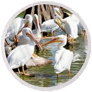 Pelican Squabble Round Beach Towel