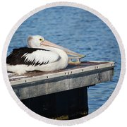 Pelican Taking Time Out 691 Round Beach Towel