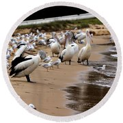 Pelicans At Pearl Beach 1.0 Round Beach Towel