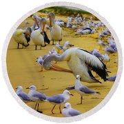 Pelicans At Pearl Beach 3.1 Round Beach Towel