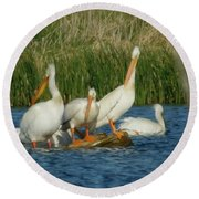 Pelicans Being Pelicans Round Beach Towel