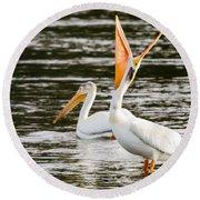 Pelicans Fishing Round Beach Towel