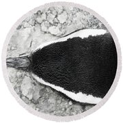 Penguin From Above Round Beach Towel