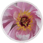 Peonie In Pink Round Beach Towel