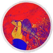 Perch Red Yellow Blue Round Beach Towel