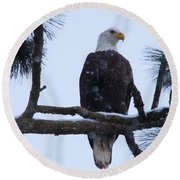 Perched And Proud  Round Beach Towel