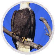 Perched Bald Eagle Round Beach Towel