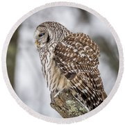 Perched Barred Owl Round Beach Towel