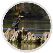 Perched Cormorant Round Beach Towel