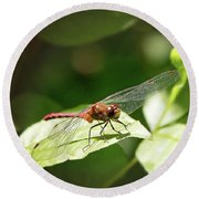 Perched Dragonfly Round Beach Towel