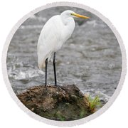 Perched Great Egret Round Beach Towel