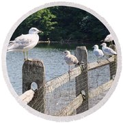 Perched Gulls Round Beach Towel
