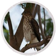 Perched Hawk Round Beach Towel