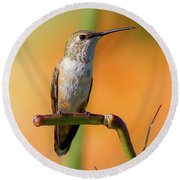 Perched Hummingbird Round Beach Towel