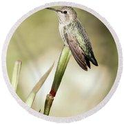 Perched Hummingbird On Flower Round Beach Towel