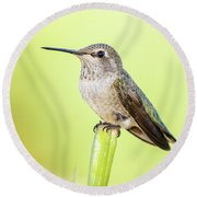 Perched Hummingbird Vi Round Beach Towel