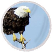 Perched On A Tree Round Beach Towel