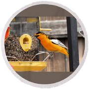 Perched Oriole Round Beach Towel