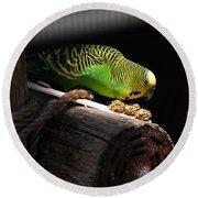 Perched Parakeet Round Beach Towel