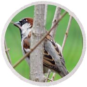 Perching Sparrow Round Beach Towel