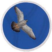 Peregrine Falcon I Round Beach Towel
